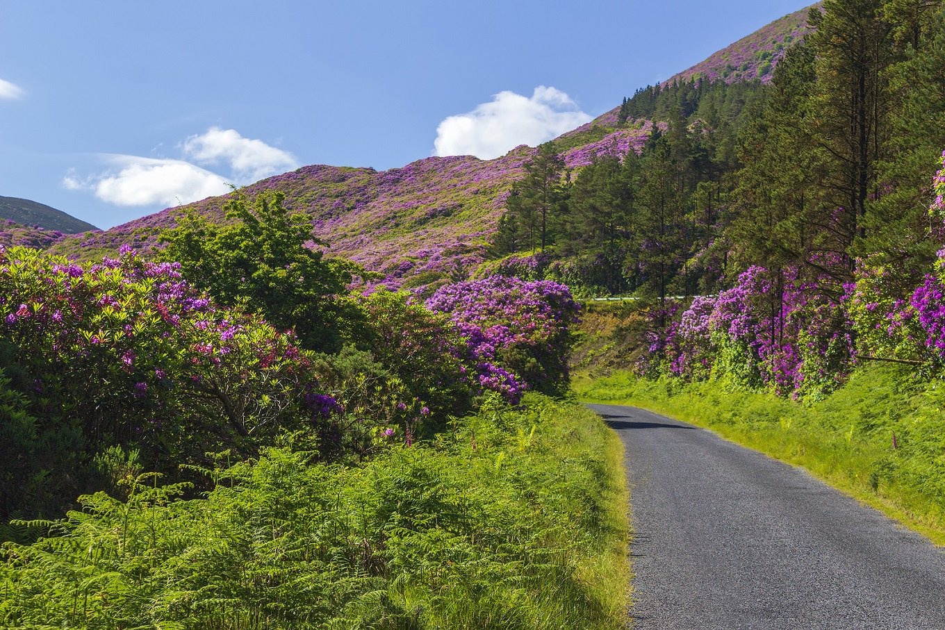 Renting a car in Ireland What to Know